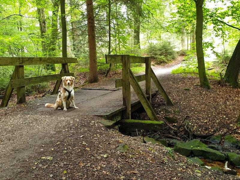 Emmy beim Wandern am Donoper Teich