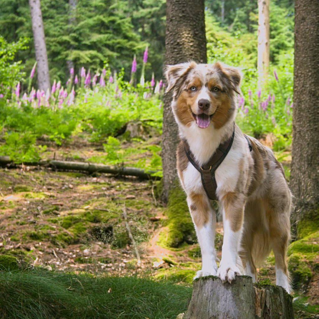 Emmy posiert im Teutoburger Wald