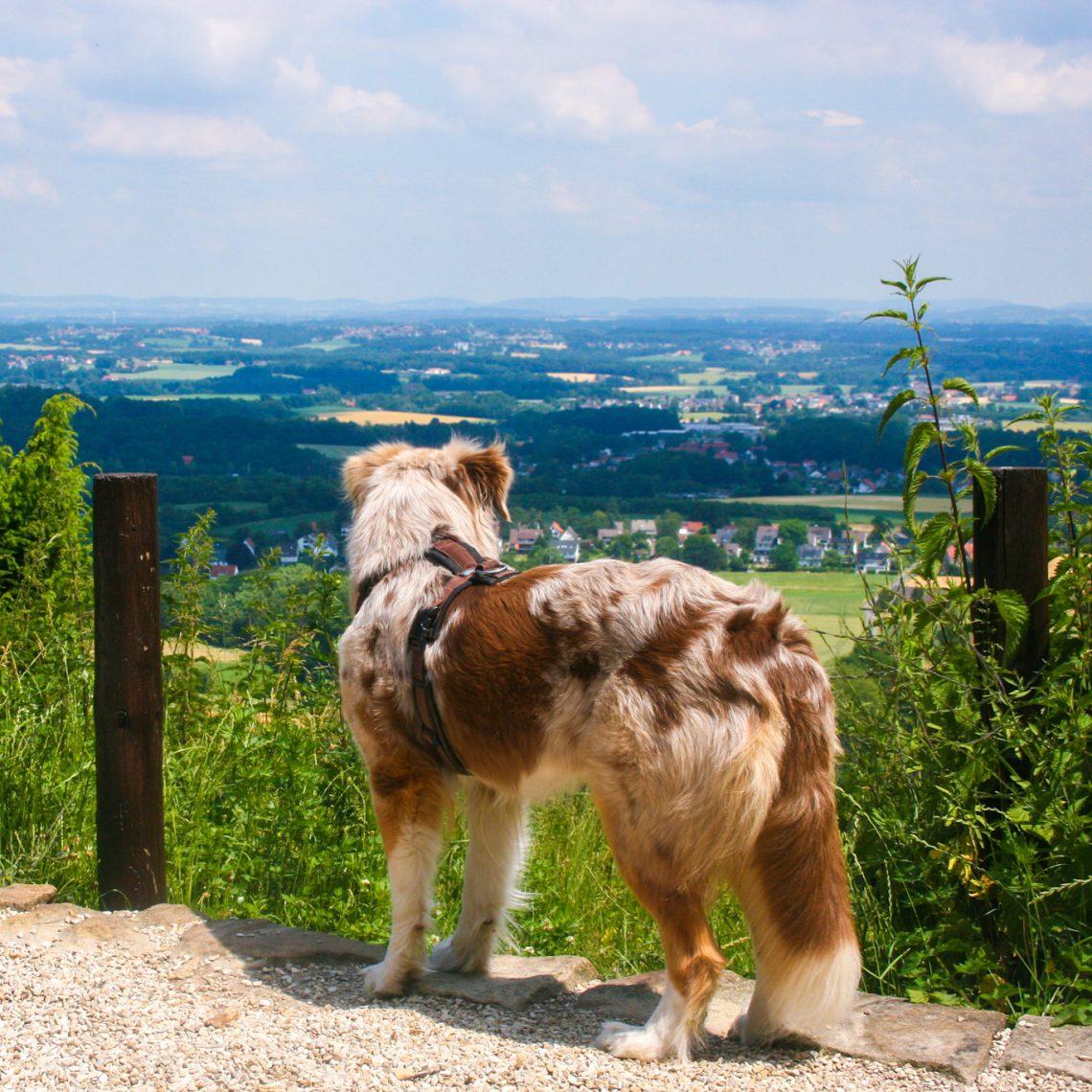 Emmy genießt den Fernblick im Teutoburger Wald
