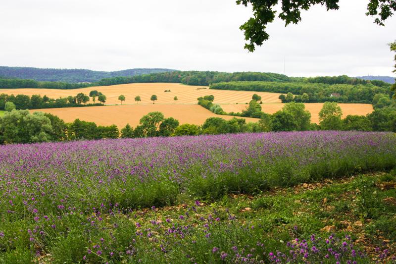 Die ostwestfälische Provence