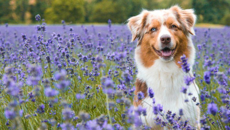 Ausflüge mit Hund