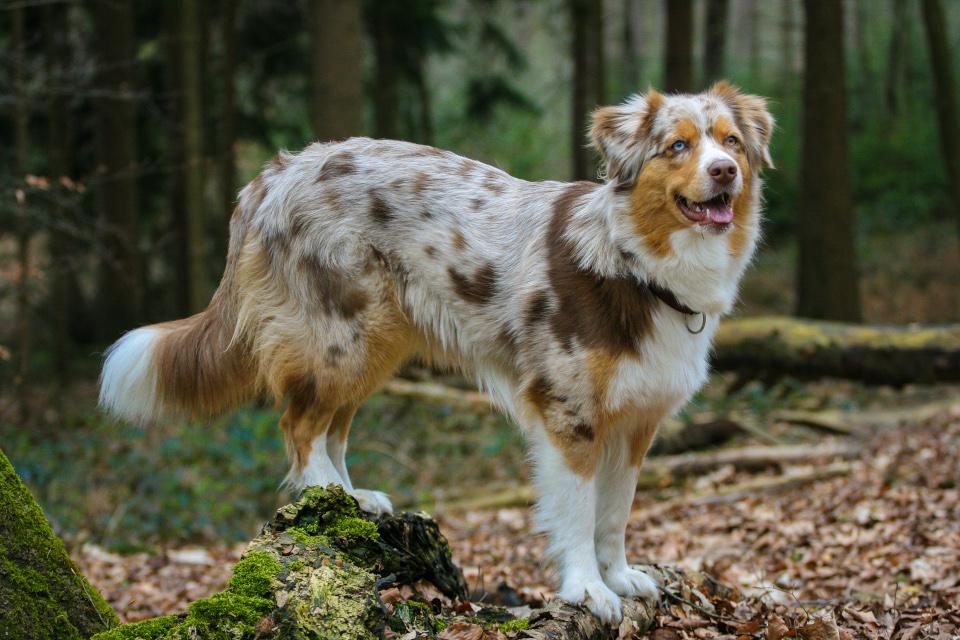 Der Teutoburger Wald ist ein Paradies für Hunde
