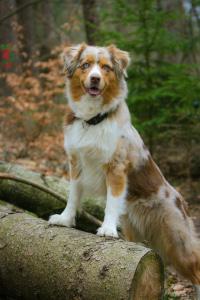 Unterwegs mit Hund im Teutoburger Wald