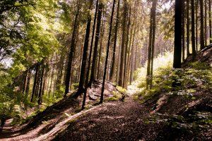 Weitläufige Wälder im Teutoburger Wald