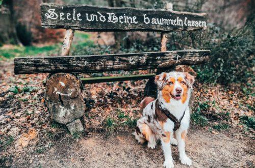 Mit Hund auf dem Schierenweg