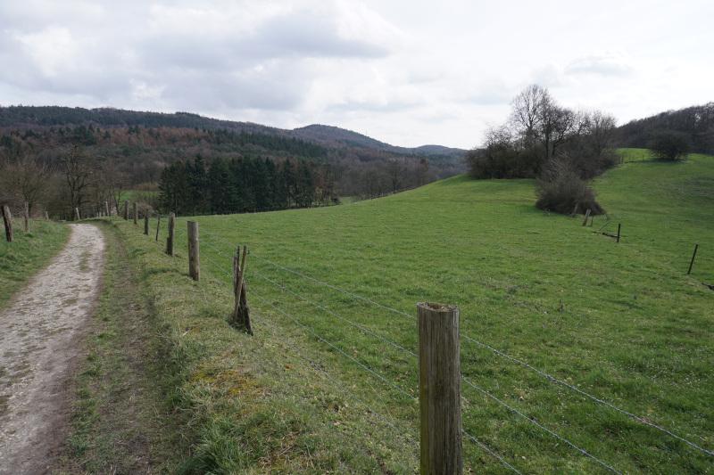 Herrlicher Blick am Leberblümchenweg in Amshausen