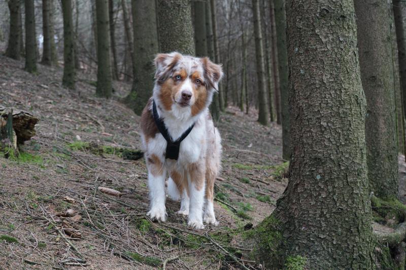 Emmy liebt die Waldwege