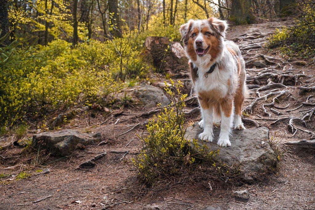 Emmy liebt die Wurzeln auf der Velmerstot-Route