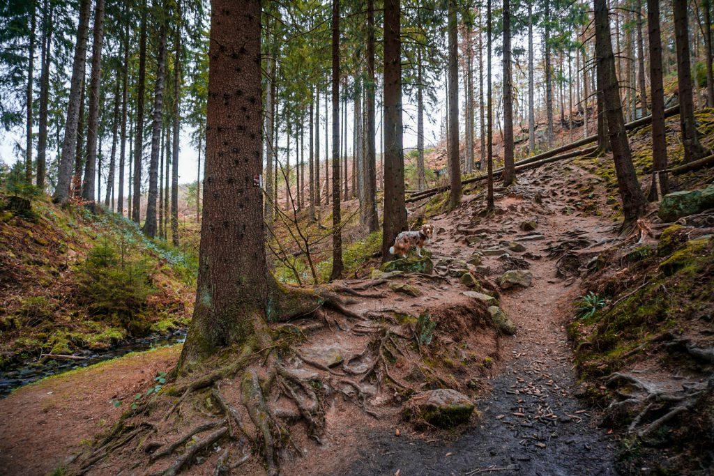 Über Stock und Stein im Silberbachtal