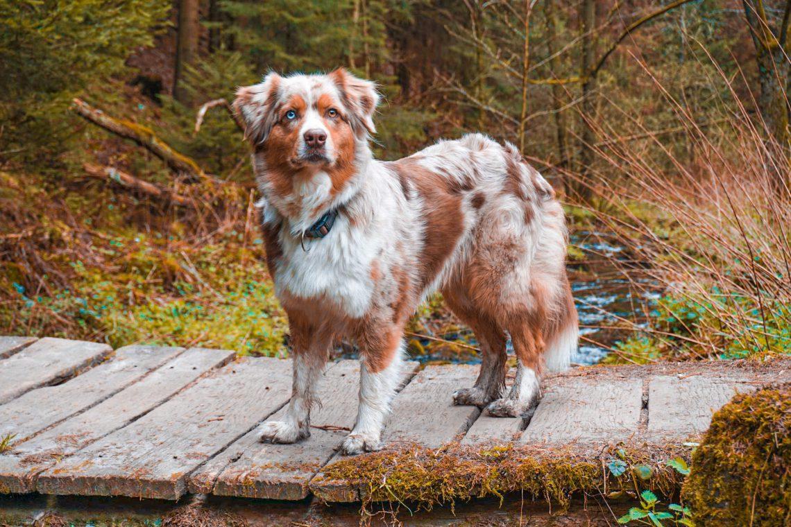 Emmy auf der Velmerstot-Route im Silberbachtal