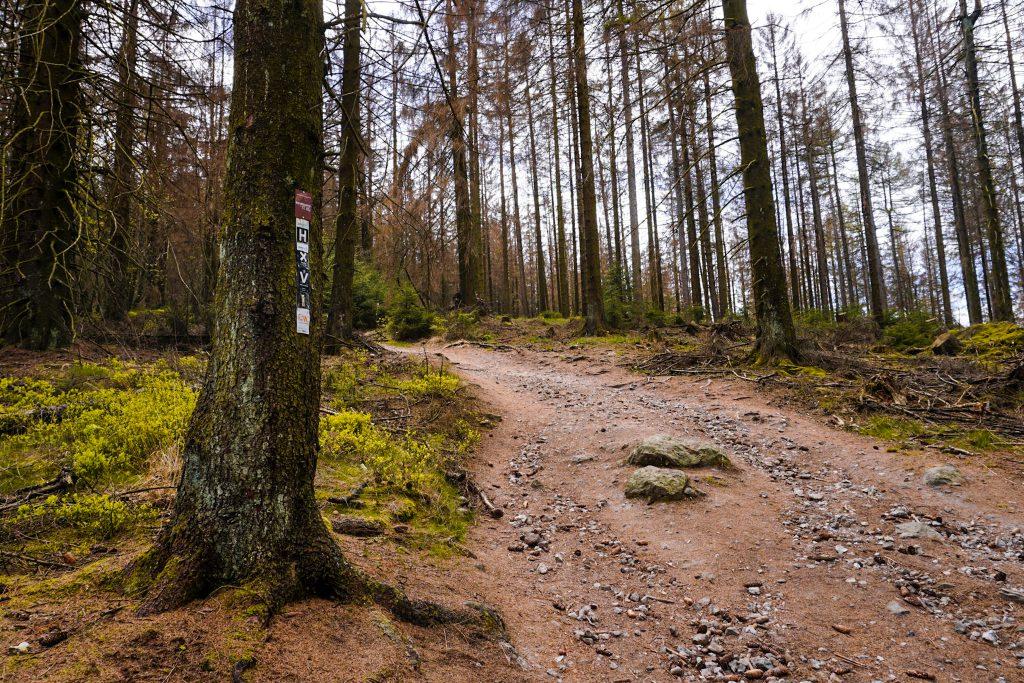 Der Wanderweg zum Lippischen Velmerstot