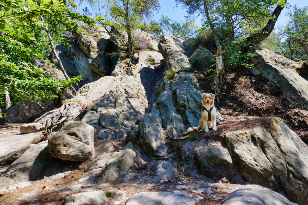 Emmy posiert auf den Dörenther Klippen