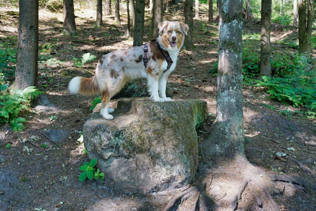 Emmy hüpft auf einen Felsen