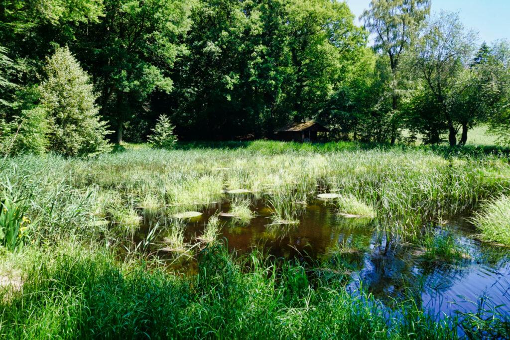 Ein kleiner Teich zur Abkühlung