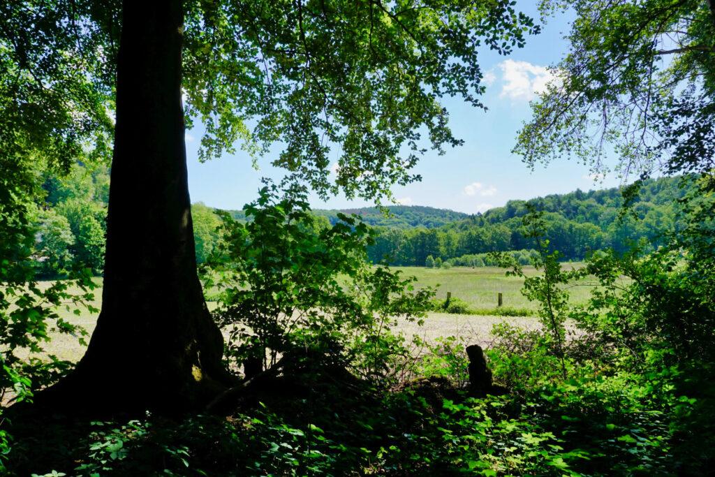 Felder und Wiesen an der Teutofschleife Dörenther Klippen