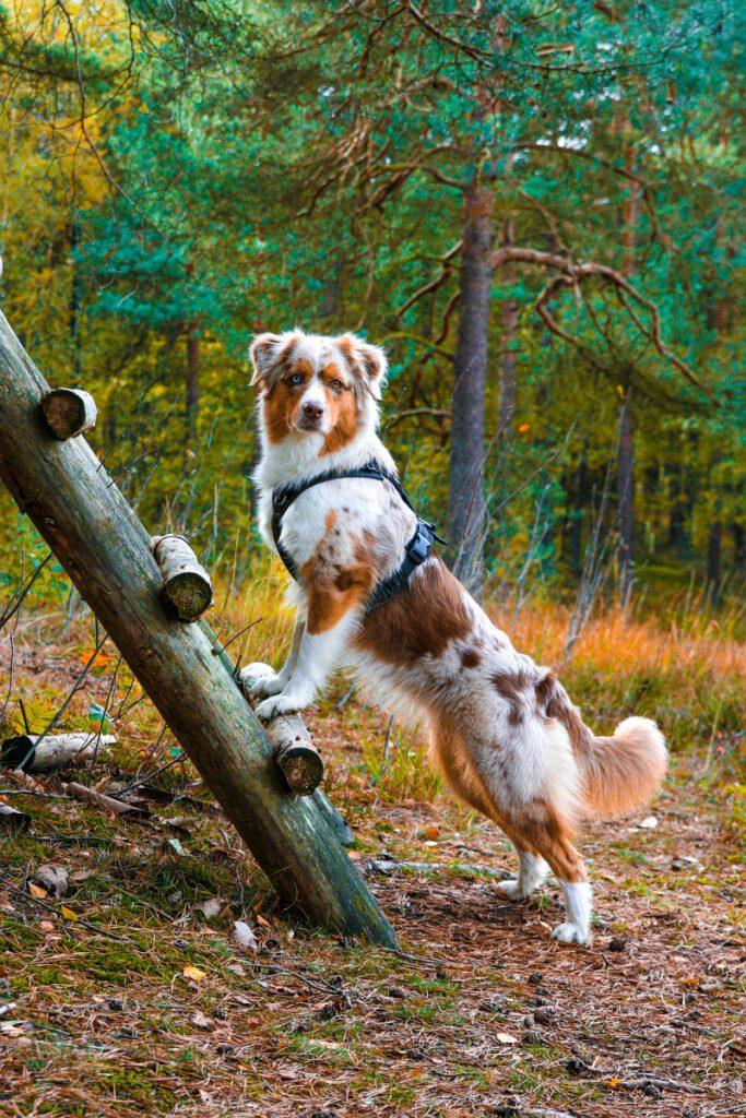 Hund posiert auf dem Wandrweg