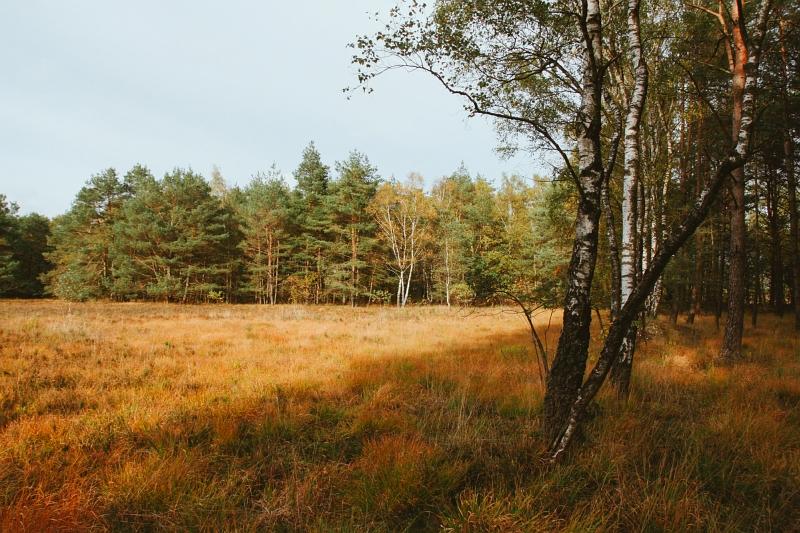 Heidefläche auf dem Dünenpfad in Augustdorf