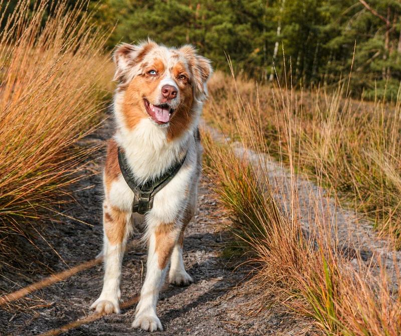 Hund zwischen den Gräsern