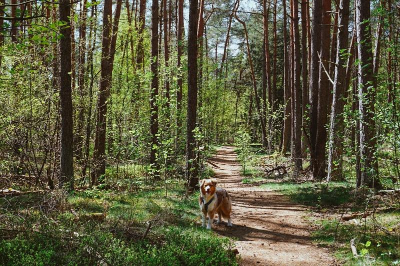 Emmy im Wald