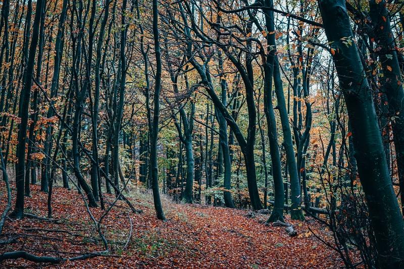 Herbstliche Stimmung auf dem Luisenturmweg