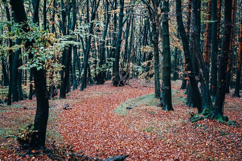 Herrliche Waldwege auf der Wanderung