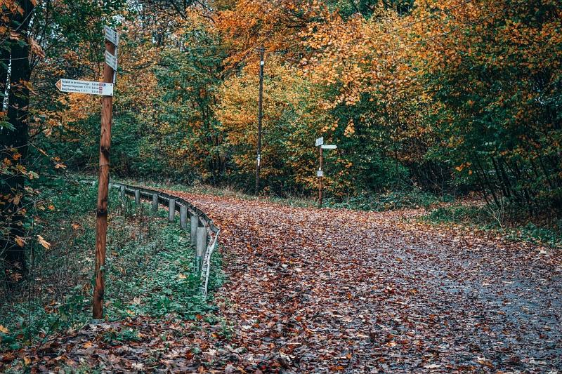 Luisenturmweg: Weggabelung auf dem Wanderweg