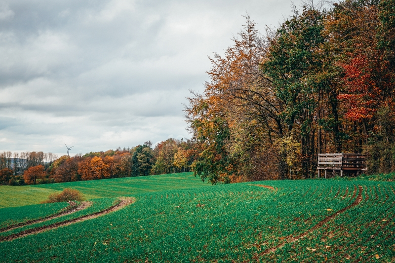 Feldblicke am Luisenturmweg