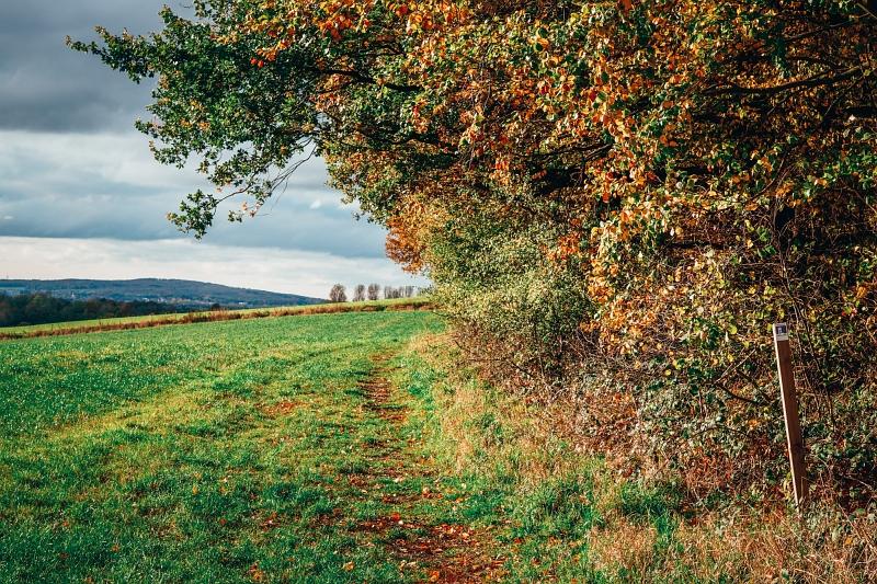 Der Luisenturmweg führt am Waldrand entlang