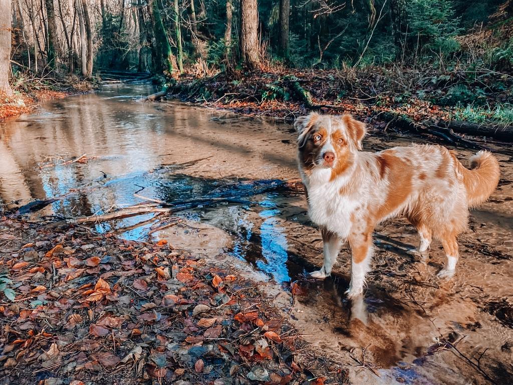 Abkühlung für Hunde im Furlbach