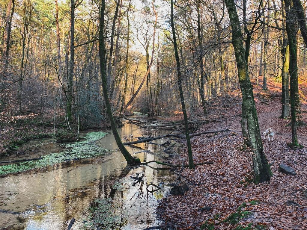 Natur pur im Furlbachtal