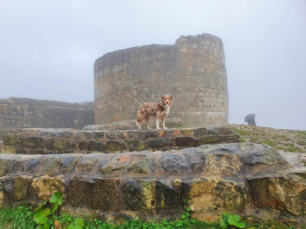 Ein Hund auf der Falkenburg