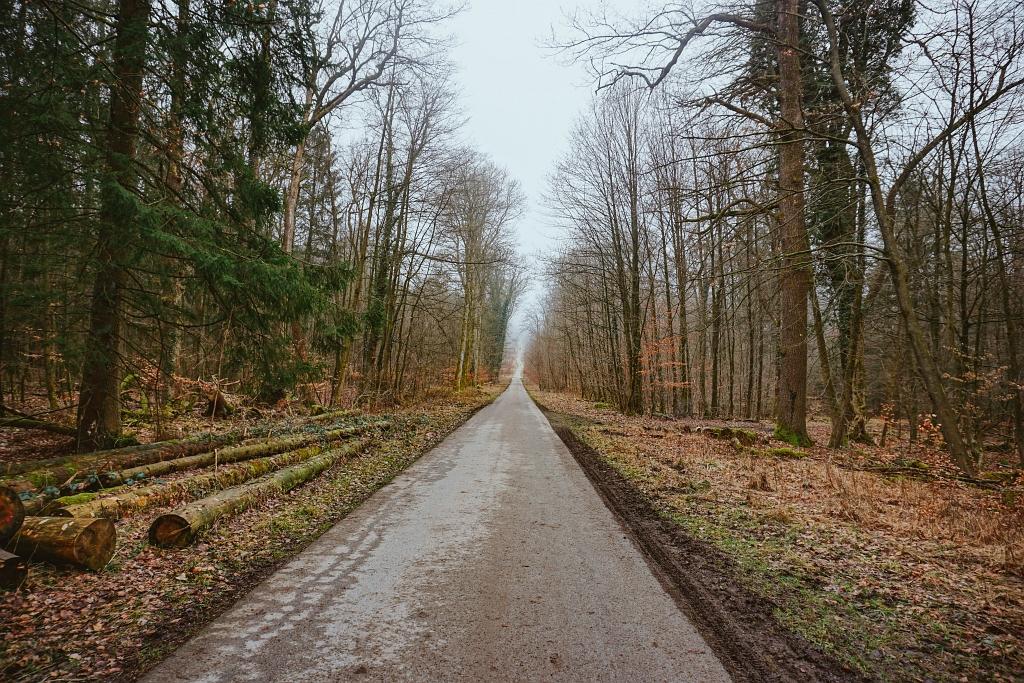 Waldweg Richtung Falkenburg