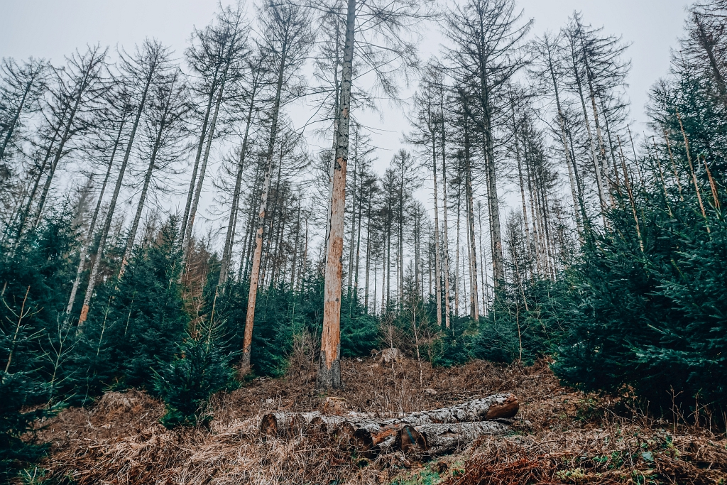Bäume im Teutoburger Wald