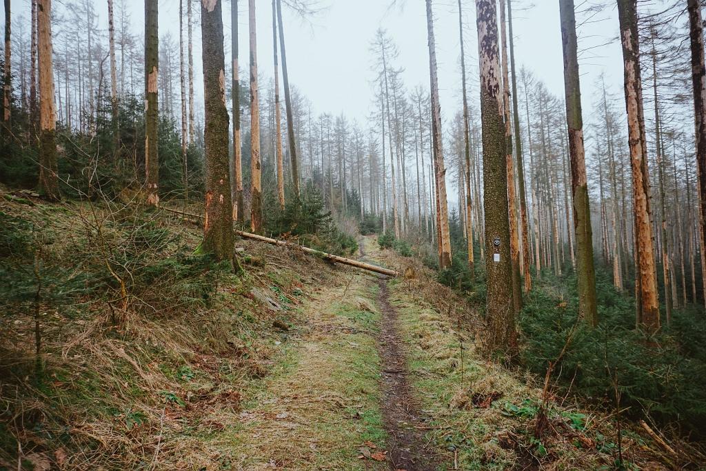 Waldpfad im Teutoburger Wald