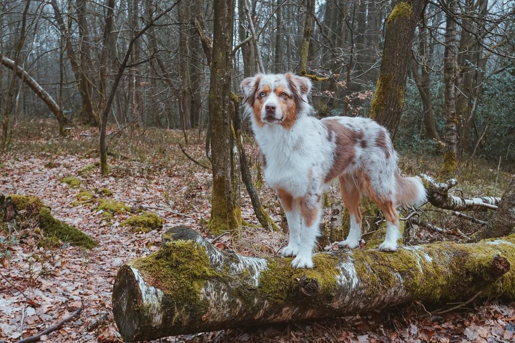 Emmy auf einem Baumstamm