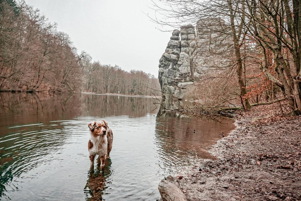 Emmy im Teich an den Externsteinen